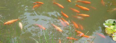 Teich im Garten